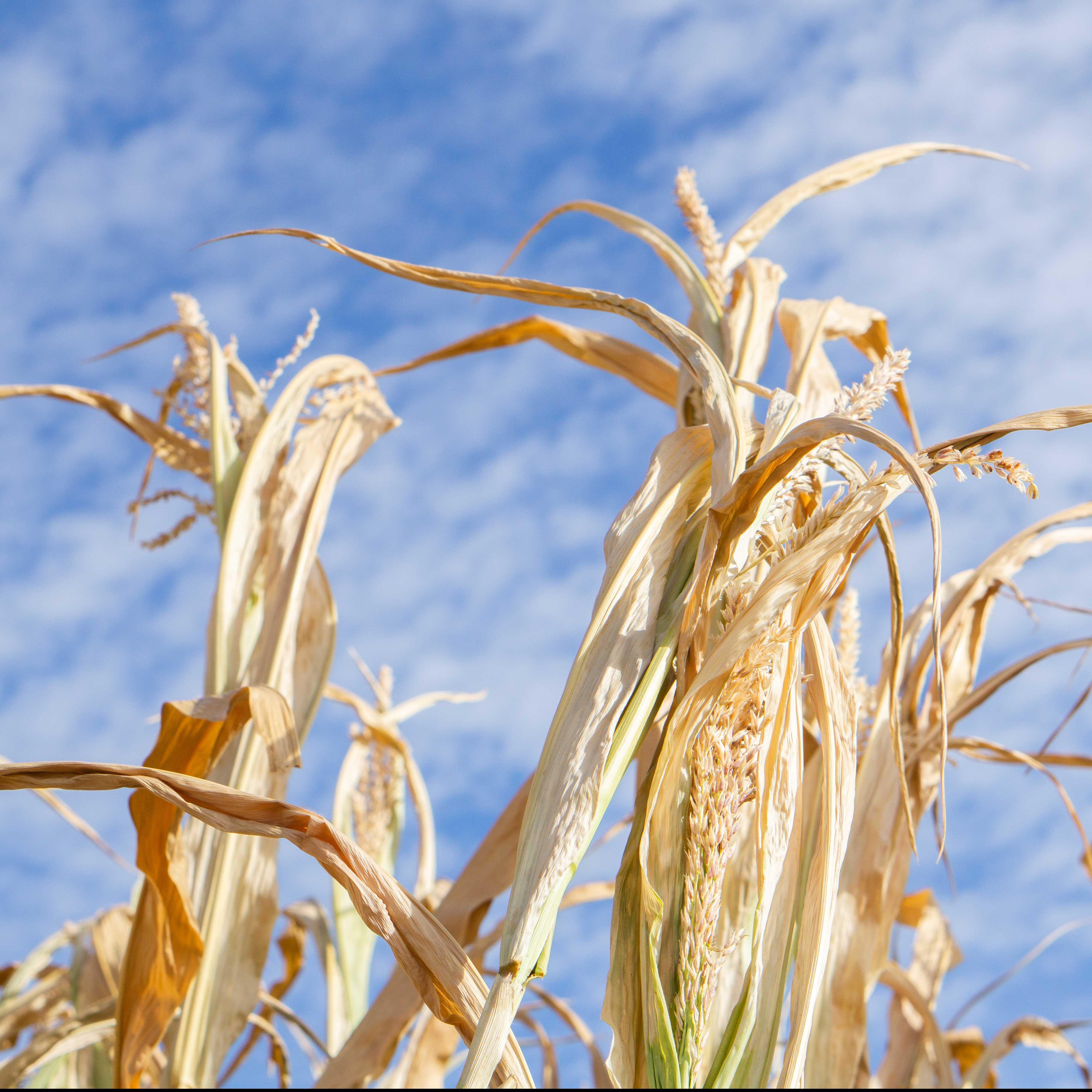 Dürrehilfen: SPD fordert zusätzlich Klimaprogramm für dieLandwirtschaft
